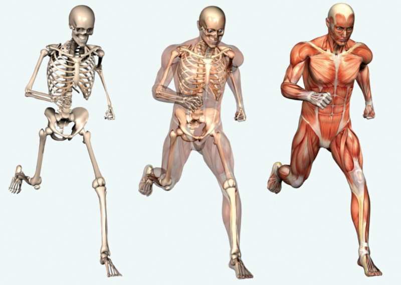 Exercise & Bone Health